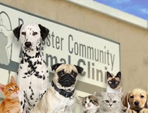 Welcome to Rochester Community Animal Clinic!