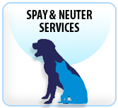spay and neuter, Rochester NY