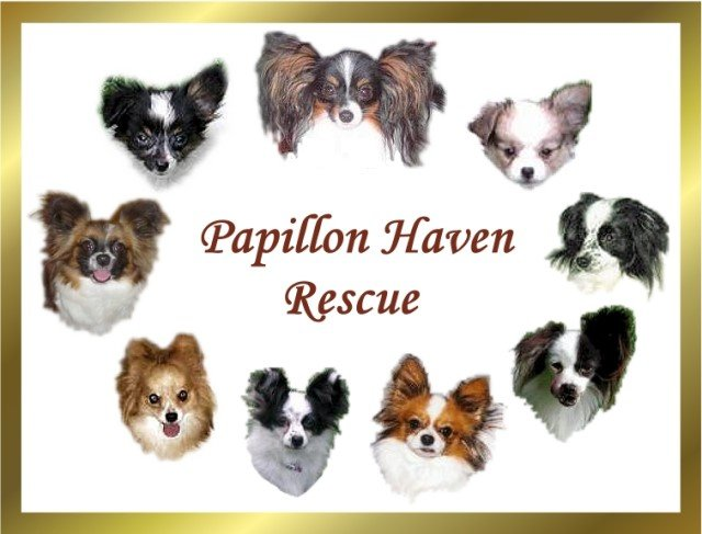 Rescue Partner Mission Statements   Rochester Community Animal